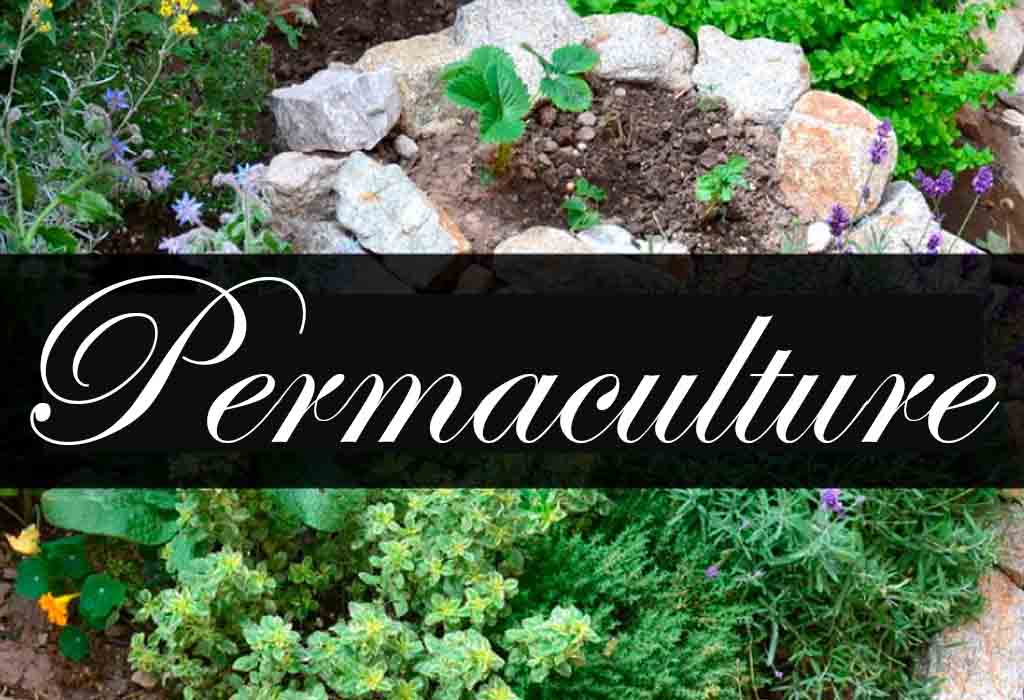 Learn more about permaculture